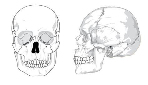 human skull  text  color clip art  clkercom