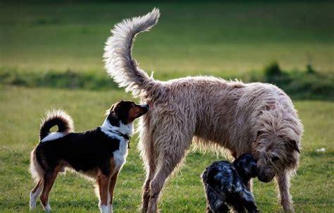 rangordnung bei hunden agila