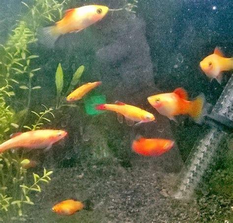 caisse d epargne siege poissons eau douce aquarium 28 images aquarium hd