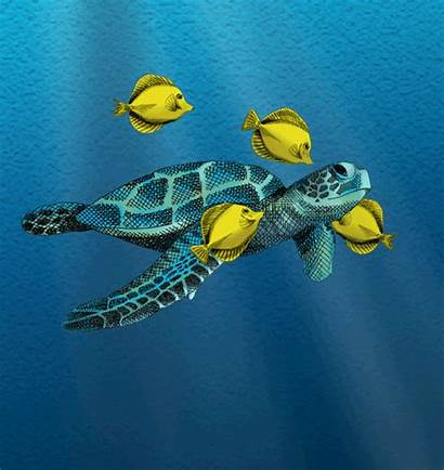 Turtle Fish Ocean Symbiosis Why Being Example