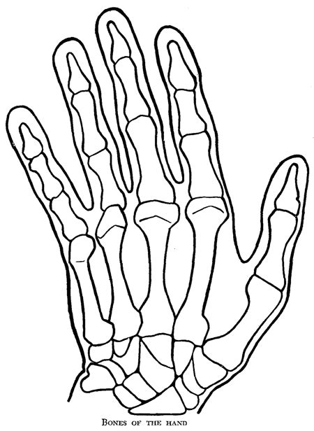Drawing Hands : How to Draw Hands and Underlying Structure