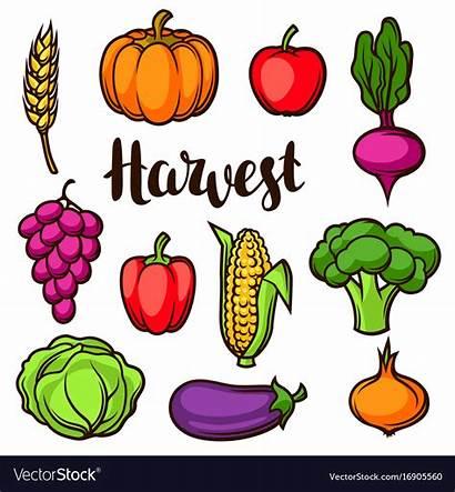 Vegetables Fruits Harvest Autumn Clipart Vector Fall