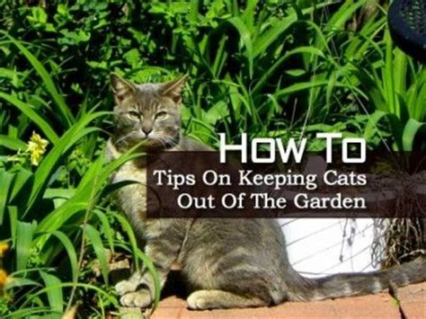 how to keep cats out of yard how to tips on keeping cats out of the garden gardening