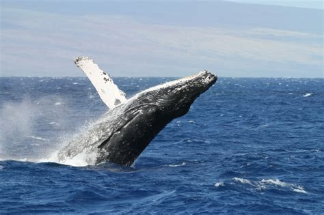 Boat Crash Uganda by Whale Erlebnis Hawaii Individualreise