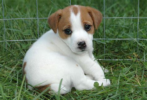 Hunde leben nicht mehr tausend jahre mit einem menschen zusammen und fügen sich harmonisch in dessen struktur ein. Suche Kleine aber süße Rassen (kleine Hunde, suesse-hunde)
