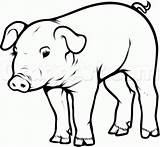 Pig Draw Step Pot Drawing Realistic Clipart Belly Pigs Drawings Easy Sketch Animal Bellied Farm Hoof Animals Steps Dragoart Coloring sketch template