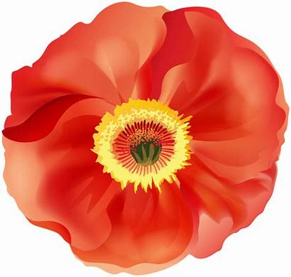 Poppy Clip Remembrance Clipart Transparent Yopriceville Flowers