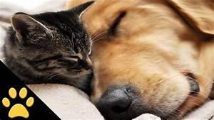 Cutest Cat And Dog Video Ever
