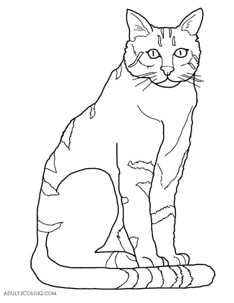 cat coloring pages pint sized pumas  parade