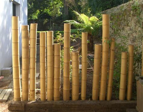 tronc de bambou decoratif cl 244 ture en bambou pour une touche orientale dans le jardin