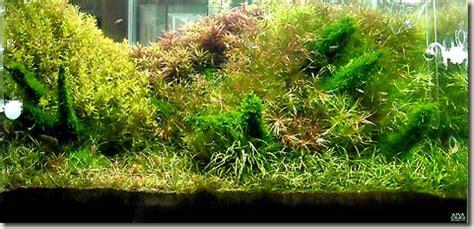 Aquascape Malaysia by Aquascape Contest In Malaysia Aquapress Bleher