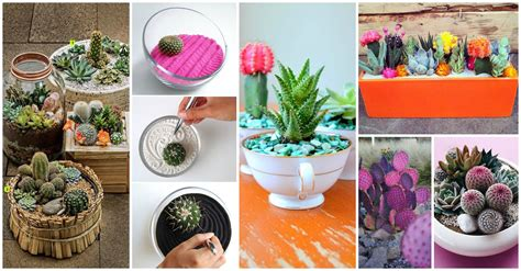 28 small cactus garden ideas 1469 best images about