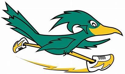 Clipart Road Runners Roadrunner Club Bird Jersey
