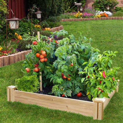 do s and don ts for your raised garden bed garden club