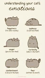 cat emotions understanding your cats emotions weknowmemes