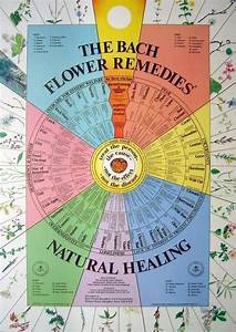 Bach Flower Wall Poster Chart Bach Flowers Remedies