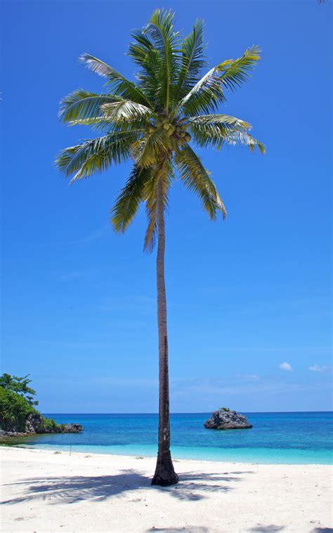 trigonometry  measure  height   tree