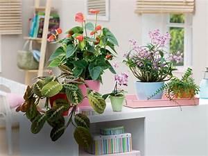Grande Plante D Intérieur Facile D Entretien : trouvez la plante d 39 int rieur qu 39 il vous faut d tente jardin ~ Premium-room.com Idées de Décoration
