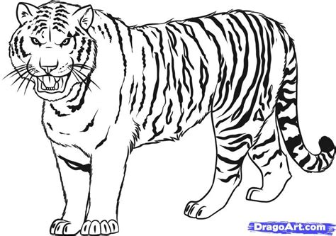 Year Of The Tiger Coloring Pages