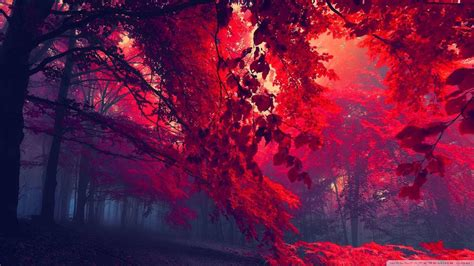 Wallpapers Hd 1080p by Wallpaper 1080p Forest 76 Images