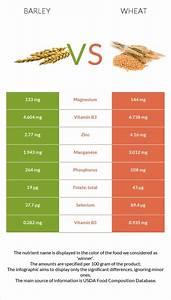 Barley Vs Wheat In Depth Nutrition Comparison