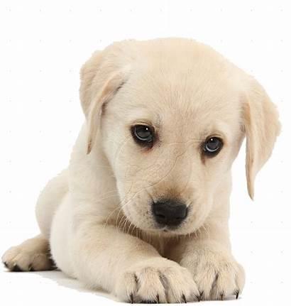 Dog Puppy Transparent Puppies Rs Vibratie Geluid