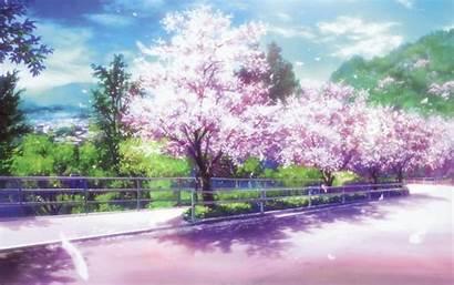 Blossom Cherry Anime Desktop Tree Clannad Wallpapers