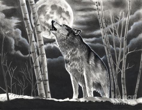Realistic Charcoal Drawings Wolf Howling The Moon