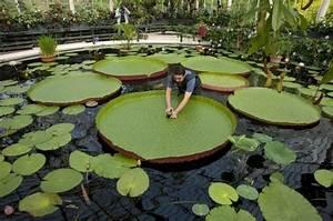Teich Bepflanzen Ausgefallene Pflanzen Fr Teich Pool