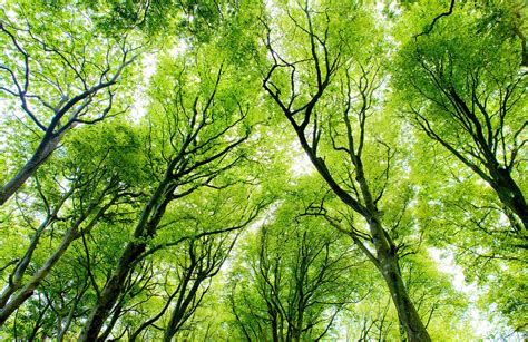 Bright Green Canopy Forest Wall Mural  Muralswallpapercouk