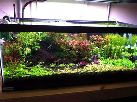 aquascaping supplies 17 best images about aquascapes terrariums on