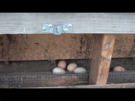 retro fit chicken coop  side door  roll  nesting