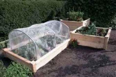 raised beds vegetable growing in raised beds