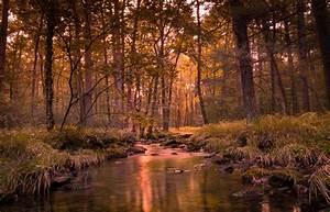 Landscape, Forest, River, Wallpapers, Hd, Desktop, And, Mobile, Backgrounds