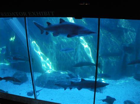 aquarium des deux oceans aquarium des deux oc 233 ans