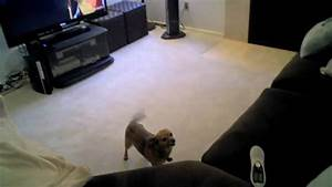funny dog rubs butt on floor youtube With dog rubbing but on floor