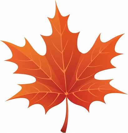 Leaf Maple Leaves Autumn
