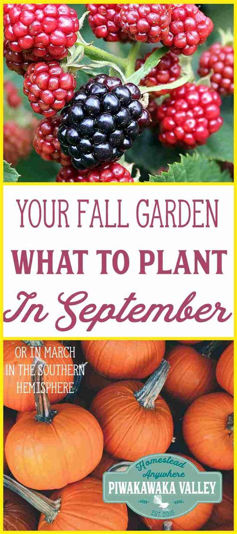 Garten Pflanzen September by Zu Wissen Was Sie Im September In Ihrem Garten Pflanzen