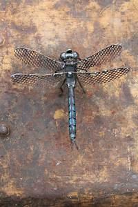Recycling Basteln Metall Figur Insekt Libelle Pinteres