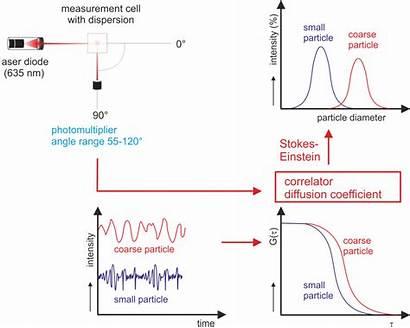 Measurement Dls Principle Scattering Dynamic Particle Data