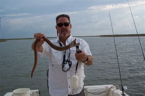 Bay Boat Club Snake by Are There Saltwater Sea Snakes In The Hull