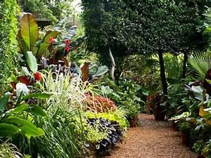 Plantes Exotiques Rustiques : amenagement jardin exotique fp54 jornalagora ~ Melissatoandfro.com Idées de Décoration
