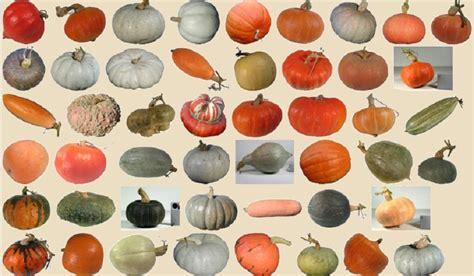 potimarrons potirons courges citrouilles et autres cucurbitac 233 es natures paul keirn