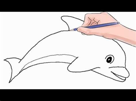 draw  dolphin easy step  step youtube