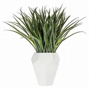 Pianta In Vaso Contempora Verde