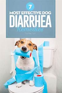 Top 7 Best Dog Diarrhea Remedies In 2017
