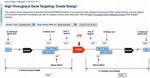 Biotec  Gene Targeting Guide
