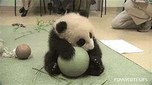 Panda GIF - Find & Share on GIPHY