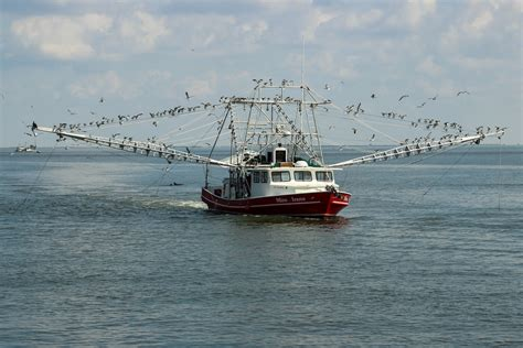 Chion Bay Boats For Sale In Louisiana by Louisiana Shrimp Boats Images