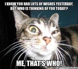 birthday cat meme belated birthday cat meme